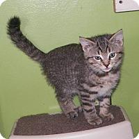 Adopt A Pet :: Dillon - Dover, OH