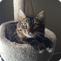 Adopt A Pet :: Moonsey - Gilbert, AZ
