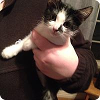 Adopt A Pet :: Lily - Bentonville, AR
