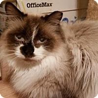 Adopt A Pet :: Basil - Whitewater, WI