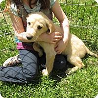 Adopt A Pet :: Diego - Middletown, RI