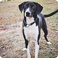 Adopt A Pet :: Surfer - Peachtree City, GA