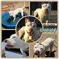 Adopt A Pet :: Adorable Snowy - Los Angeles, CA
