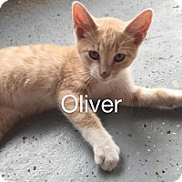 Adopt A Pet :: Oliver - Oxford, NY