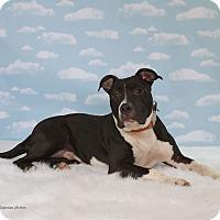 Adopt A Pet :: Cannon - Baton Rouge, LA