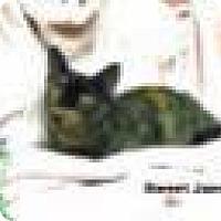 Adopt A Pet :: SOFIE - Cypress, CA