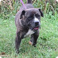 Adopt A Pet :: Ruffus - Virginia Beach, VA