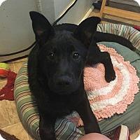 Adopt A Pet :: Marley - Columbia, SC