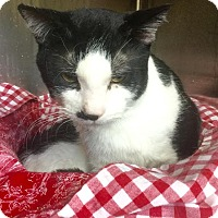 Adopt A Pet :: Sylvester - Webster, MA