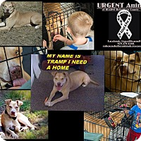 Adopt A Pet :: Tramp - Hearne, TX