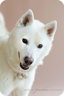 Husky Mix Dog for adoption in Marietta, Georgia - Fiji