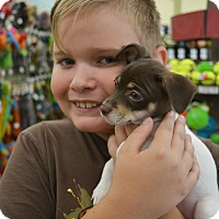 Adopt A Pet :: Brownie - Ogden, UT