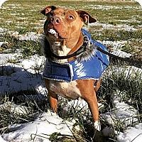 Adopt A Pet :: Pantera - Salisbury, NC
