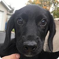 Adopt A Pet :: Jon - Warrenville, IL