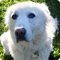 Adopt A Pet :: GRACE - Milwaukee, WI