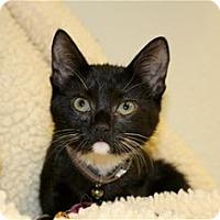 Adopt A Pet :: Selena - Lincoln, CA
