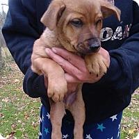 Adopt A Pet :: Dozer - Kendall, NY