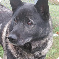 Adopt A Pet :: Skipper - Germantown, MD
