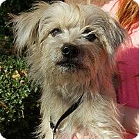 Terrier (Unknown Type, Medium) Mix Dog for adoption in Summerville, South Carolina - Widget