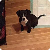 Adopt A Pet :: DOLLY - Albuquerque, NM