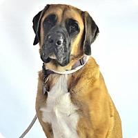 Adopt A Pet :: Maggie - Goodyear, AZ