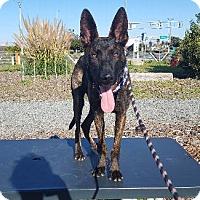 Adopt A Pet :: KILO - Pt. Richmond, CA