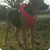 Adopt A Pet :: FRITZI - Cranston, RI