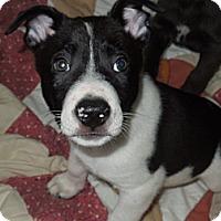 Adopt A Pet :: Kaizer - Washington, PA