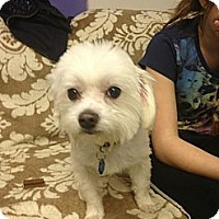 Adopt A Pet :: Happy - Tumwater, WA