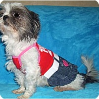 Adopt A Pet :: Zeta - Mooy, AL