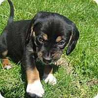 Adopt A Pet :: Naveen - Novi, MI