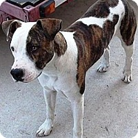 Adopt A Pet :: Rosco - Gilbert, AZ