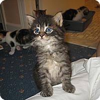 Adopt A Pet :: KENNA - Hamilton, NJ