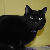 Adopt A Pet :: Jasmine - Bay City, MI