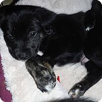 Adopt A Pet :: Filbert - Winchester, VA