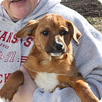 Adopt A Pet :: Paxton - in Maine - kennebunkport, ME