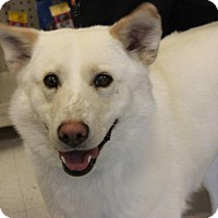 Adopt A Pet :: Sugar - Saskatoon, SK