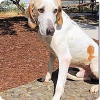 Adopt A Pet :: Jack - Sacramento area, CA