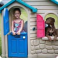 Adopt A Pet :: Dezi - Reisterstown, MD