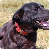 Adopt A Pet :: Jackie - Bedford, VA
