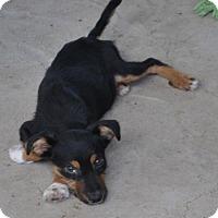 Adopt A Pet :: Drew Adoption pending - East Hartford, CT
