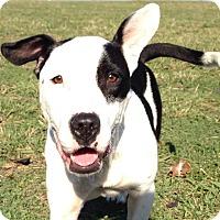 Adopt A Pet :: Mattie - Lodi, CA