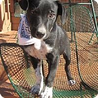 Adopt A Pet :: King - Oakland, AR
