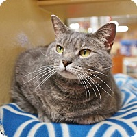 Adopt A Pet :: Eanie - Ocean View, NJ