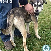 Adopt A Pet :: Bella - Kimberton, PA