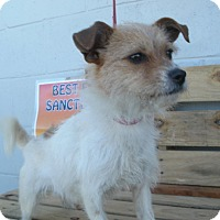 Adopt A Pet :: Macey - Jamestown, TN