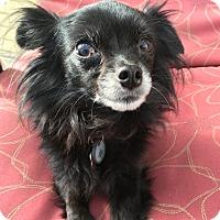 Adopt A Pet :: Tessa - San Diego, CA