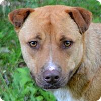 Adopt A Pet :: Skip - Sylva, NC