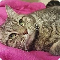 Adopt A Pet :: Melody - Colorado Springs, CO