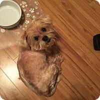 Adopt A Pet :: Amelia**Pending Adoption** - Franklin, TN